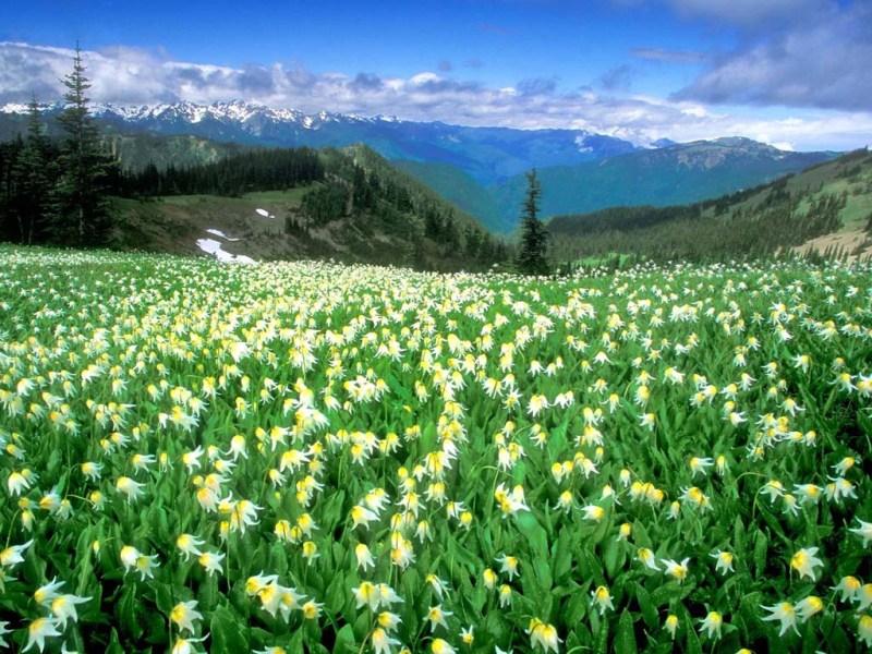 Bitki Coğrafyası